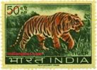 TIGER 0475 Indian Post